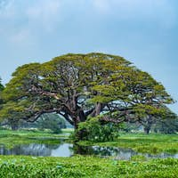 Scenic view of tropical lake with trees in water