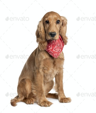 Mixed-Breed Dog with a cocker