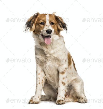 Panting Mixed-breed dog sitting against white background