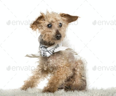 old Mixed-breed dog sitting in front of white background