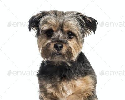 Mixed-breed dog, 3 years old, in front of white background