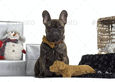 French Bulldog, 4 months old, sitting in front of white background