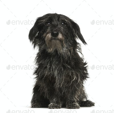 Mixed-breed dog, 13 years old, sitting in front of white background