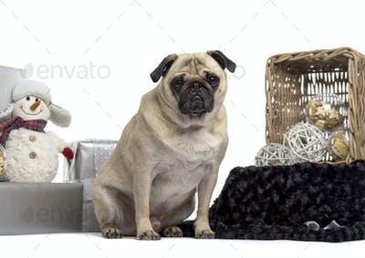 Pug sitting in front of white background