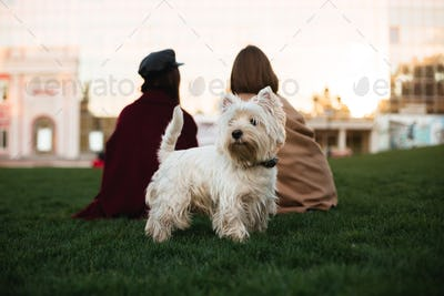 Beautiful small white dog standing on grass in park with owner on background