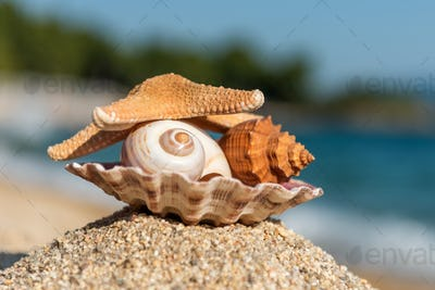 Seashells on the sand by the sea on a sunny day