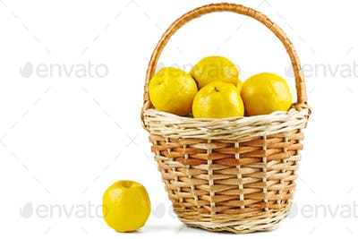 Maules quince (Chaenomeles japonica) in wicker basket isolated on white background