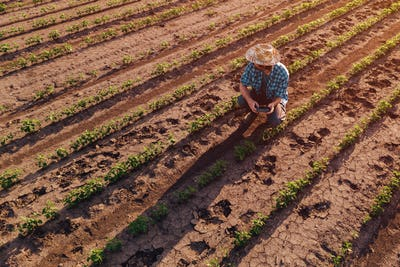 Farmer with drone remote controller in soybean field, aerial vie
