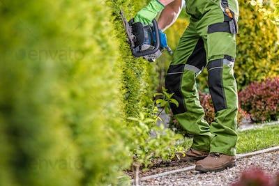 Trimming Green Garden Wall