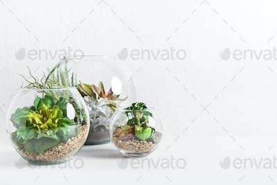 Home indoor green plants concept, copy space