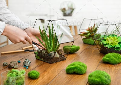 Woman making plant compositions. Home gardening concept