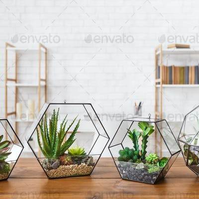 Succulent plants in florarium vases on table