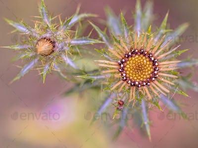 Thistle flower artistic scene