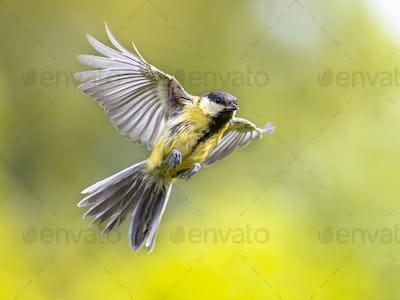 Bird in flight on bright green background crop