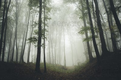 misty forest with trees and green vegetation natural labdscape b