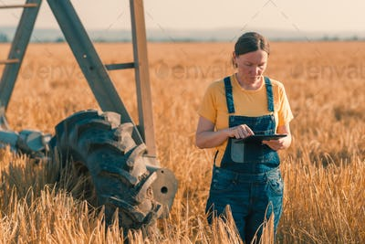 Wheat farmer using tablet in cereal crop field