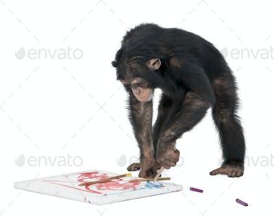 Chimpanzee drawing on a canvas - Simia troglodytes (5 years old)