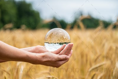 Female hands holding a crystal sphere over a wheat field