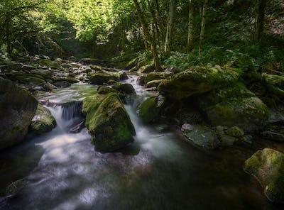 Refreshing scene of greenish light in a river in summer