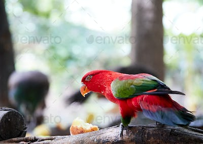 The bright and colorful parrot