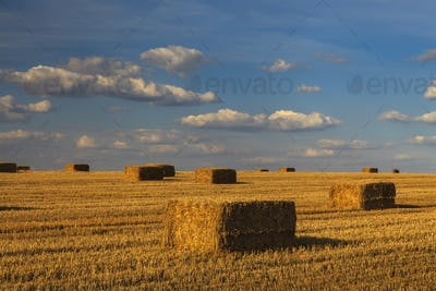 Picturesque golden field with haystacks on the background of clouds.