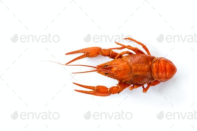 Boiled crawfish isolated on white. top view. Flat lay