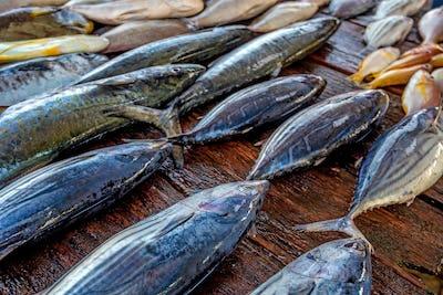Fresh raw fish at market