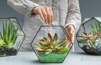 Green interior design. Professional florist's service concept