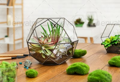 Glass geometric vases with indoor plants on wooden table