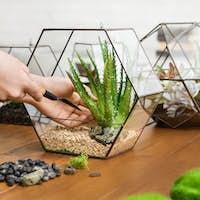Woman making mini garden. Home gardening hobby concept