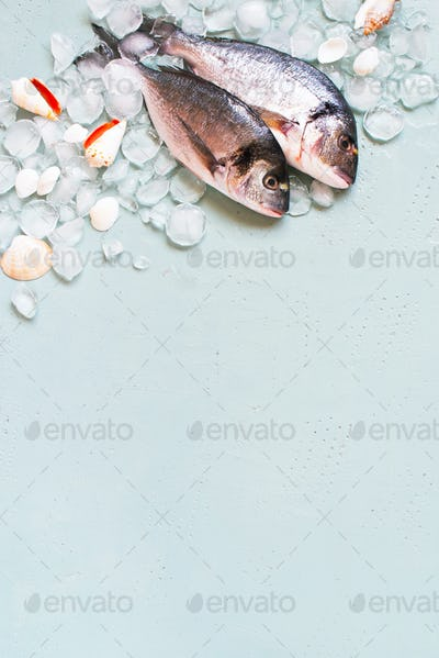 Fresh Raw Fishes Dorado in the Crashed Ice