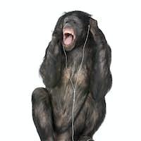 Mixed breed between Chimpanzee and Bonobo listening to music, 20 years old, studio shot