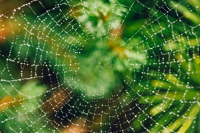 Spider web with raindrops in green plant