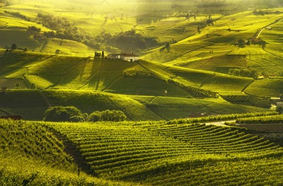 Langhe vineyards sunset panorama, Barolo, Piedmont, Italy Europe