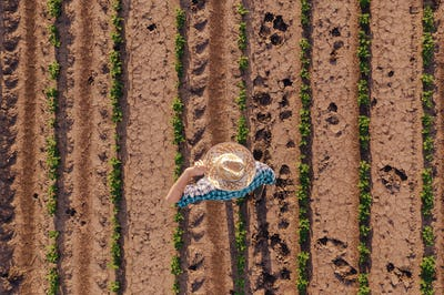 Aerial view of farmer in soybean field