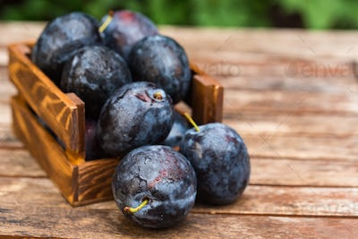Fresh ripe plums in wooden box close
