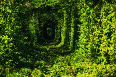 Beautiful tunnel of green trees . Tunnel of love. Old abandoned railway line