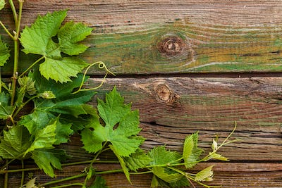 Grape leaves on a old wood background