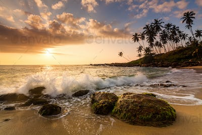 Sunset on the beach with coconut palms