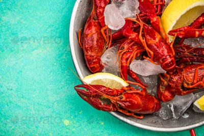 Fresh Red Crayfish with Ice Cubes on Saucepan,Copy Space