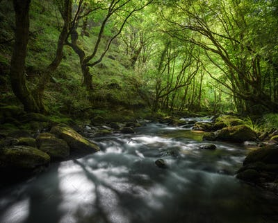 Old Forest crossed by a River