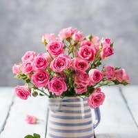 Rose Flowers in Vase. Beautiful Romantic Bouquet. Copy Space.