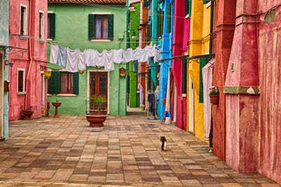 A cat walking in the colored houses of Burano