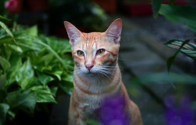 Adorable ginger cat in the garden