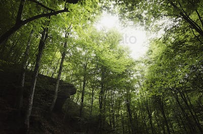 green natural forest background