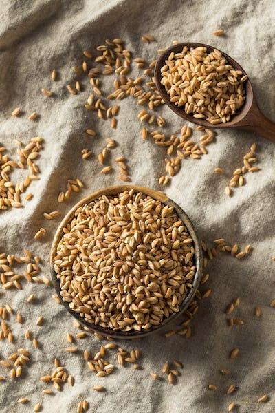 Raw Organic Farro Grain