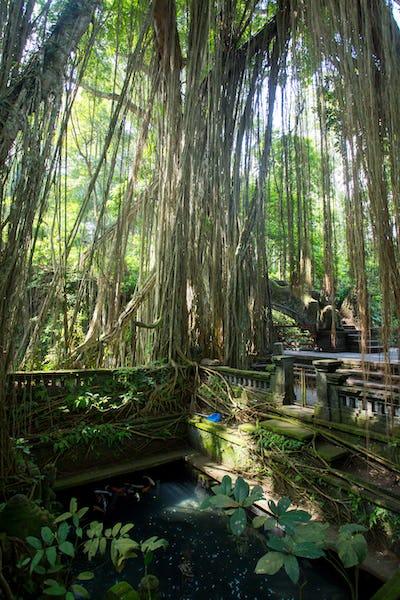 Monkey Forest Scenery