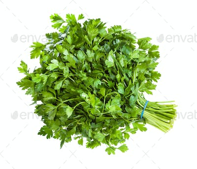 big bunch of natural green parsley herb isolated
