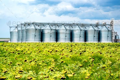 Distant view of sunflower oil refinery in a field