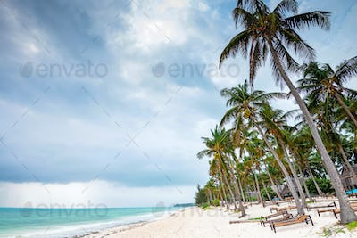 Tropical coast, sunbeds and palm trees in Tanzania. Beach holiday concept